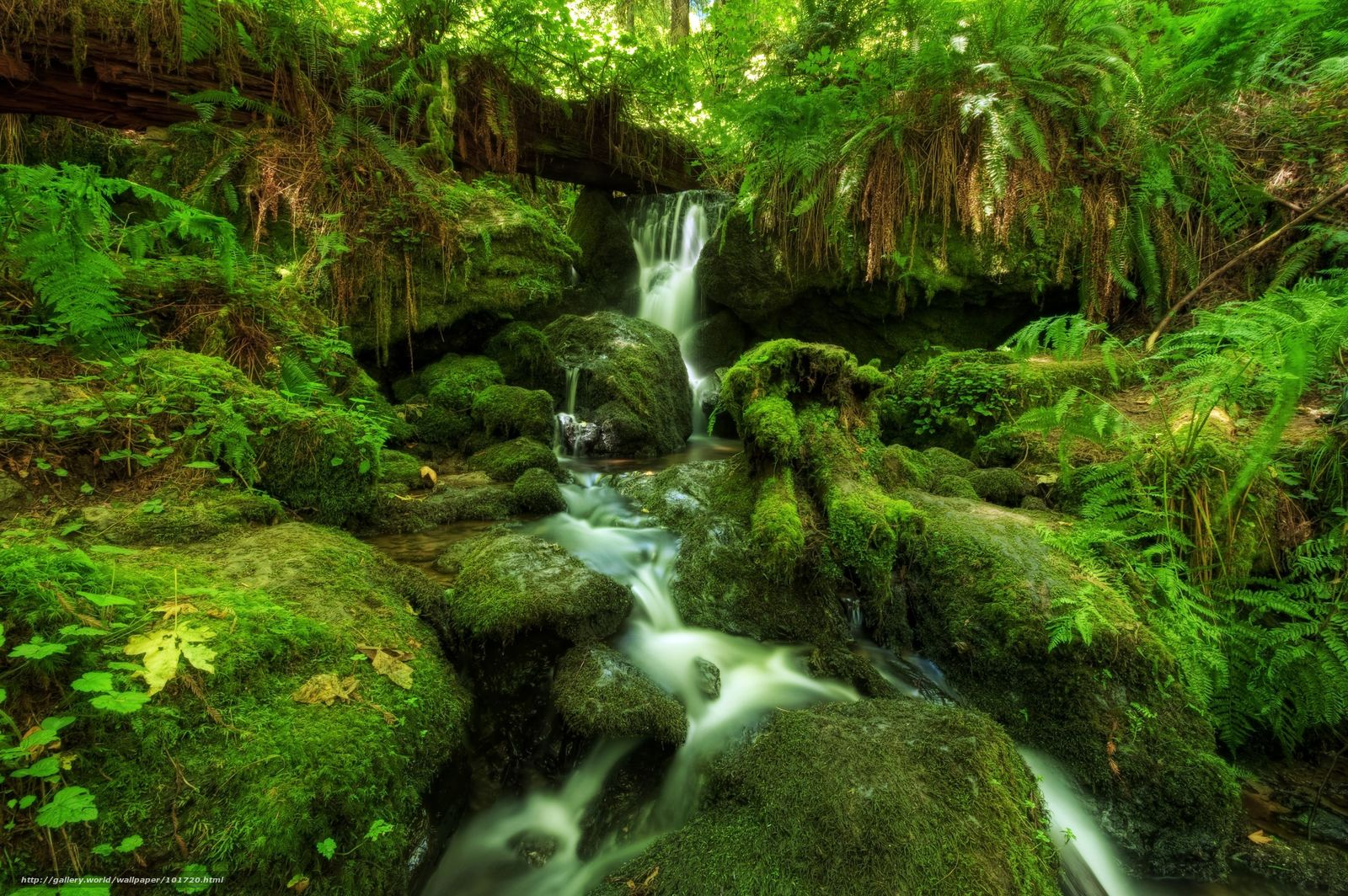 Hq cascadas bosques helechos musgos 2560x1703 imagen naturaleza