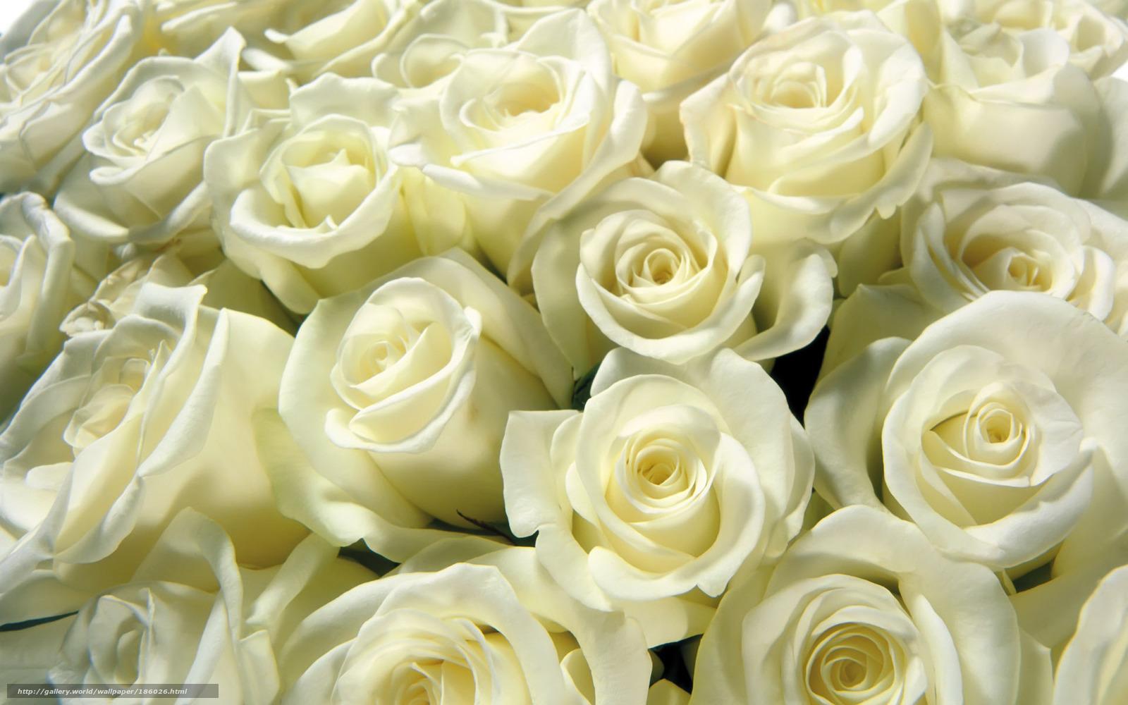 Hq картинка букет белые розы бутоны