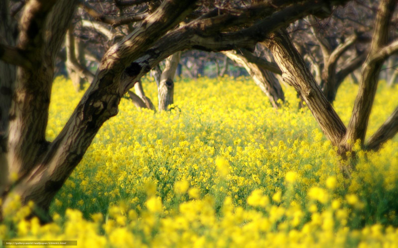 Léto, stromy, květiny, krása, něha, 2560x1600 obrázek / příroda