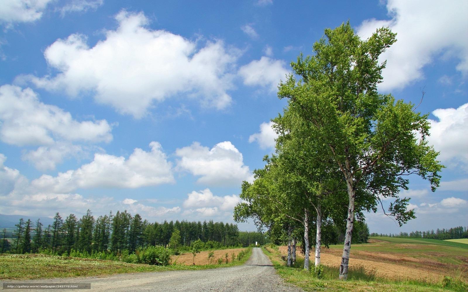 Лето дорога деревья березы лес