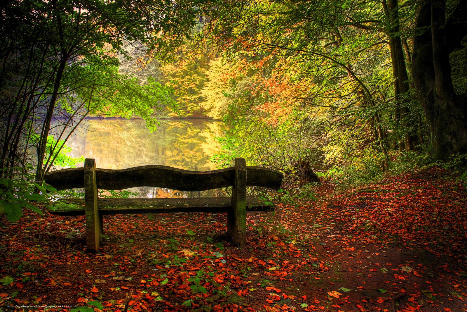Hq doğa göl sonbahar manzara ağaçlar 4271x2848 resim doğa