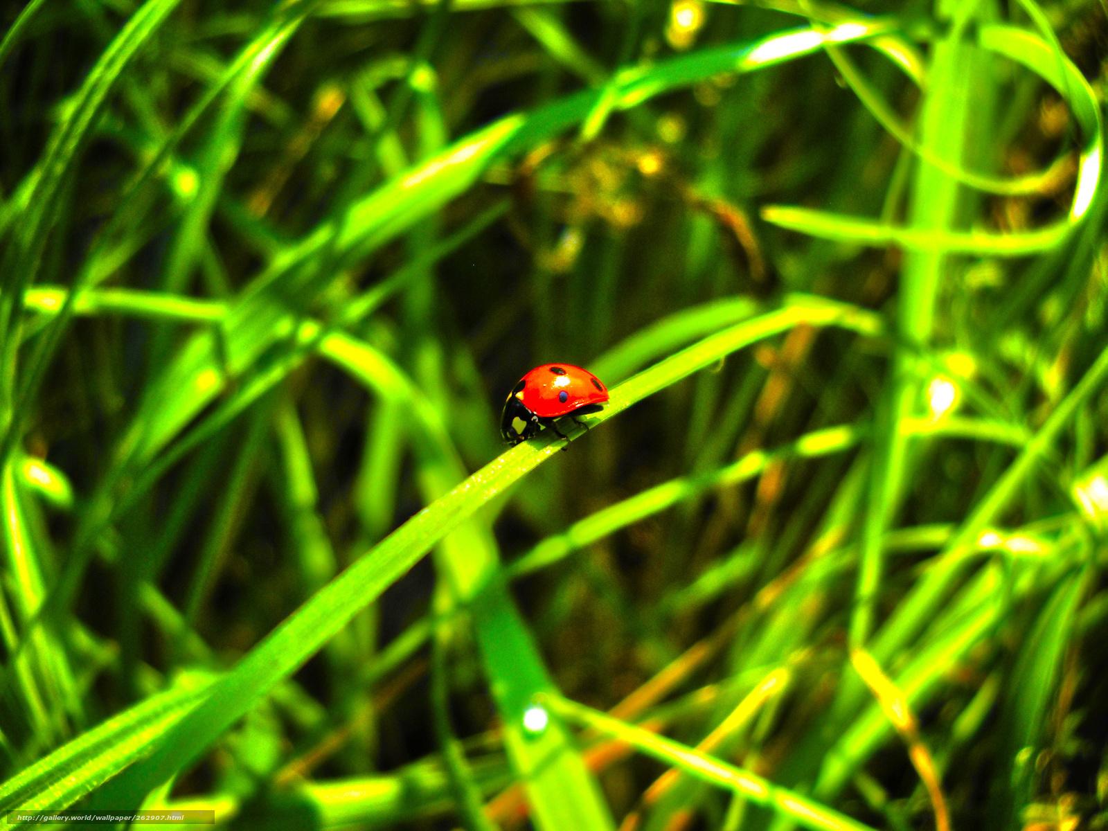Hdr, saturace, příroda, léto, zelená, 3648x2736 obrázek / krajiny