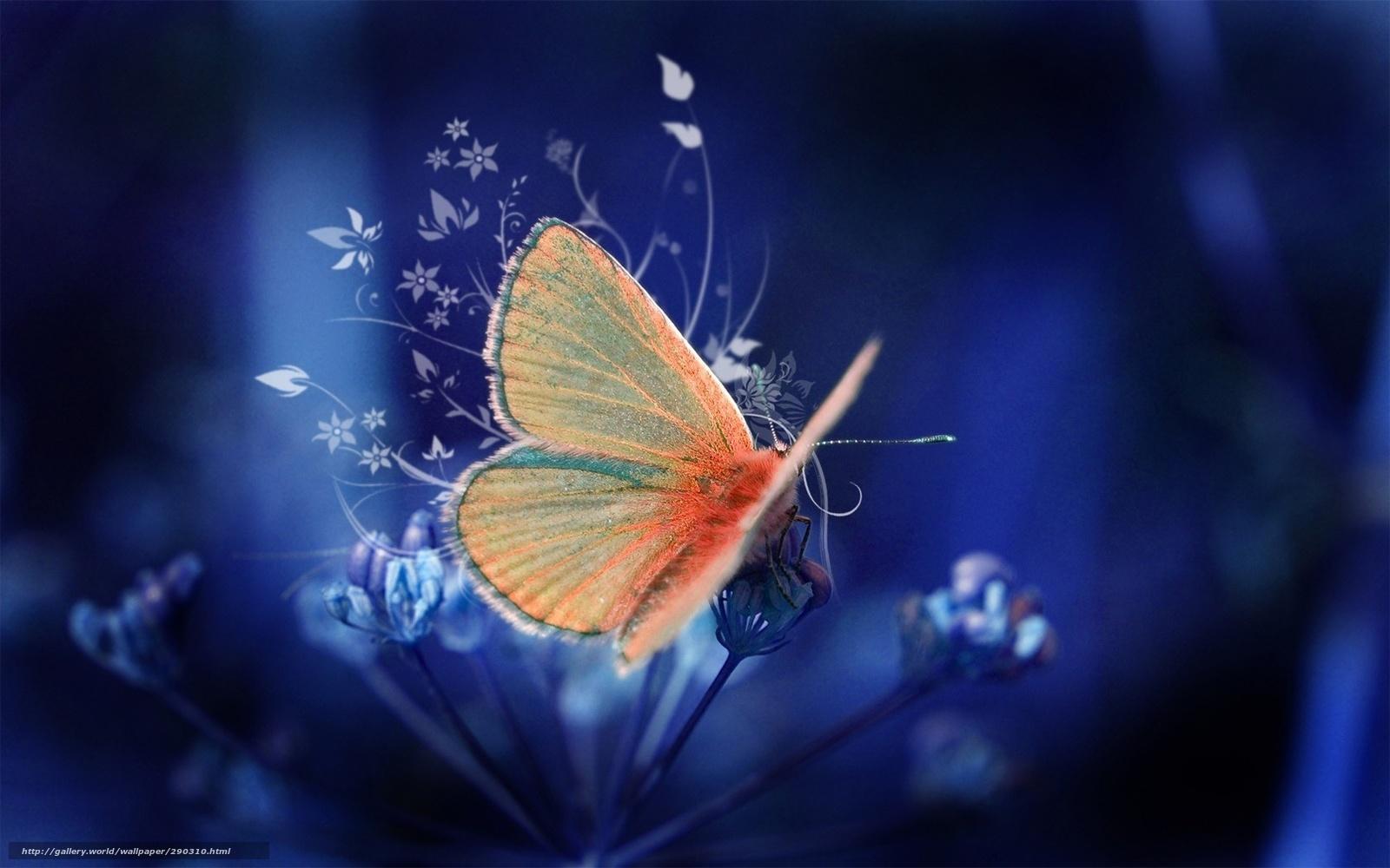 Hq kelebek arka plan renk 1680x1050 resim rendering