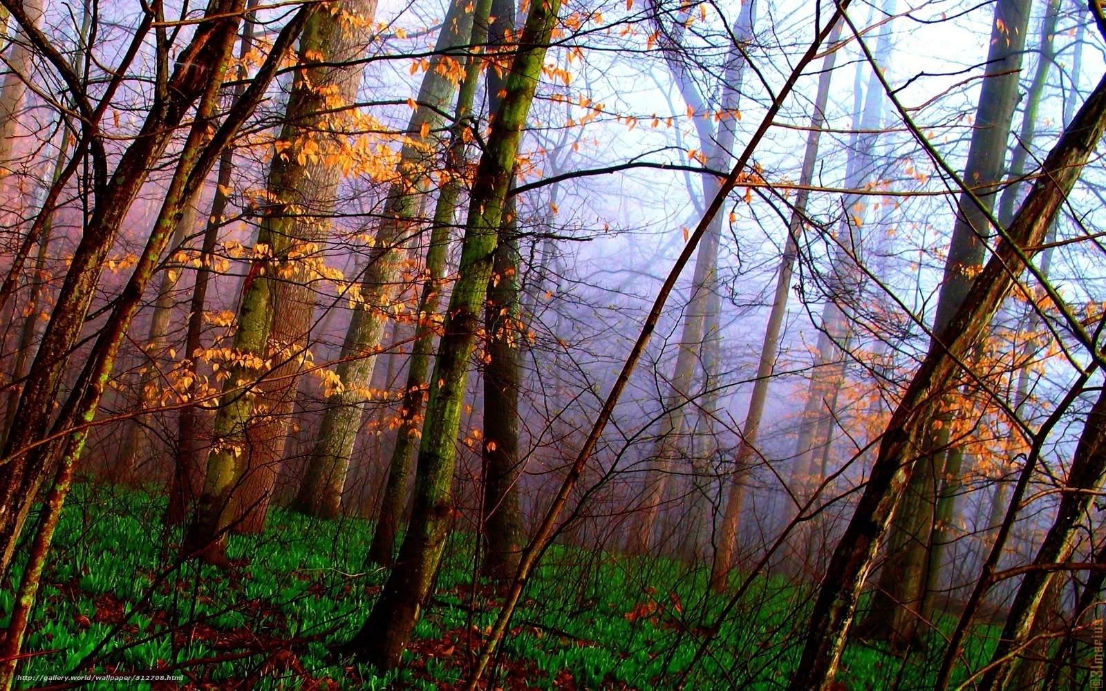 Картинка осенний лес - 8e1