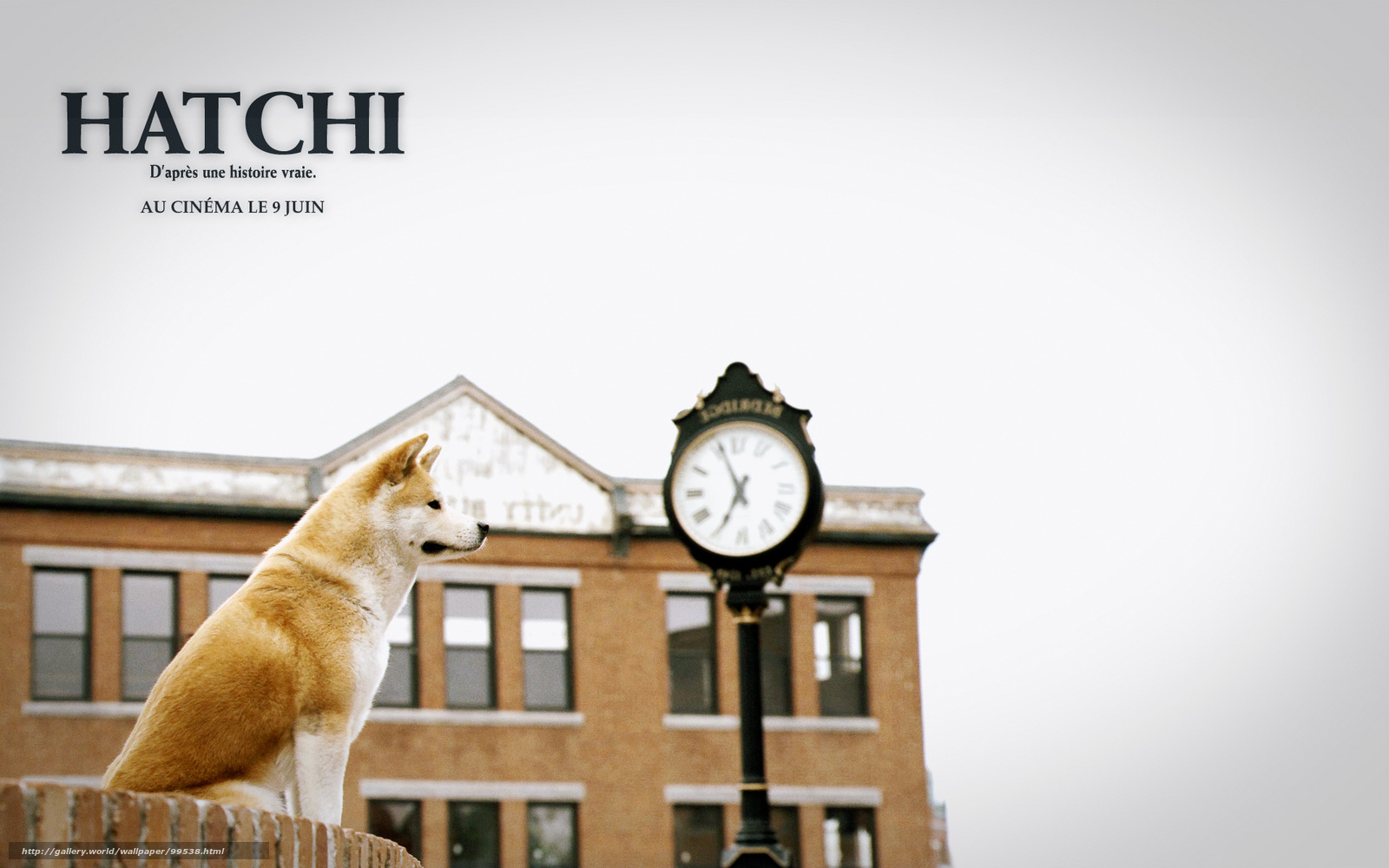Hachiko A Dog S Story  Free Download