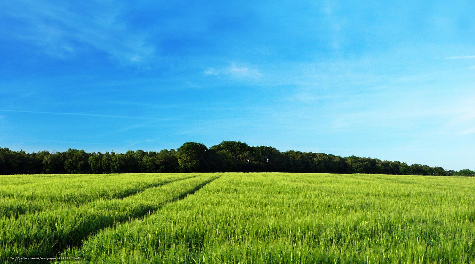 Пейзажи фото природа поле поля