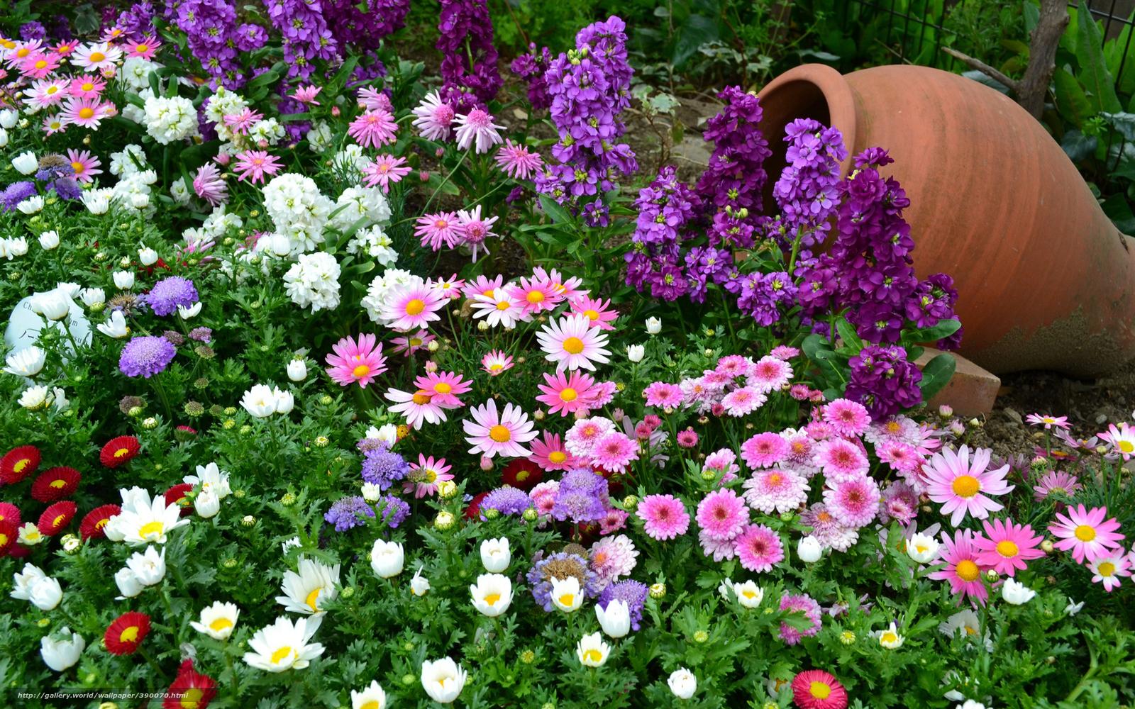 Нежные цветы незабудки на фото
