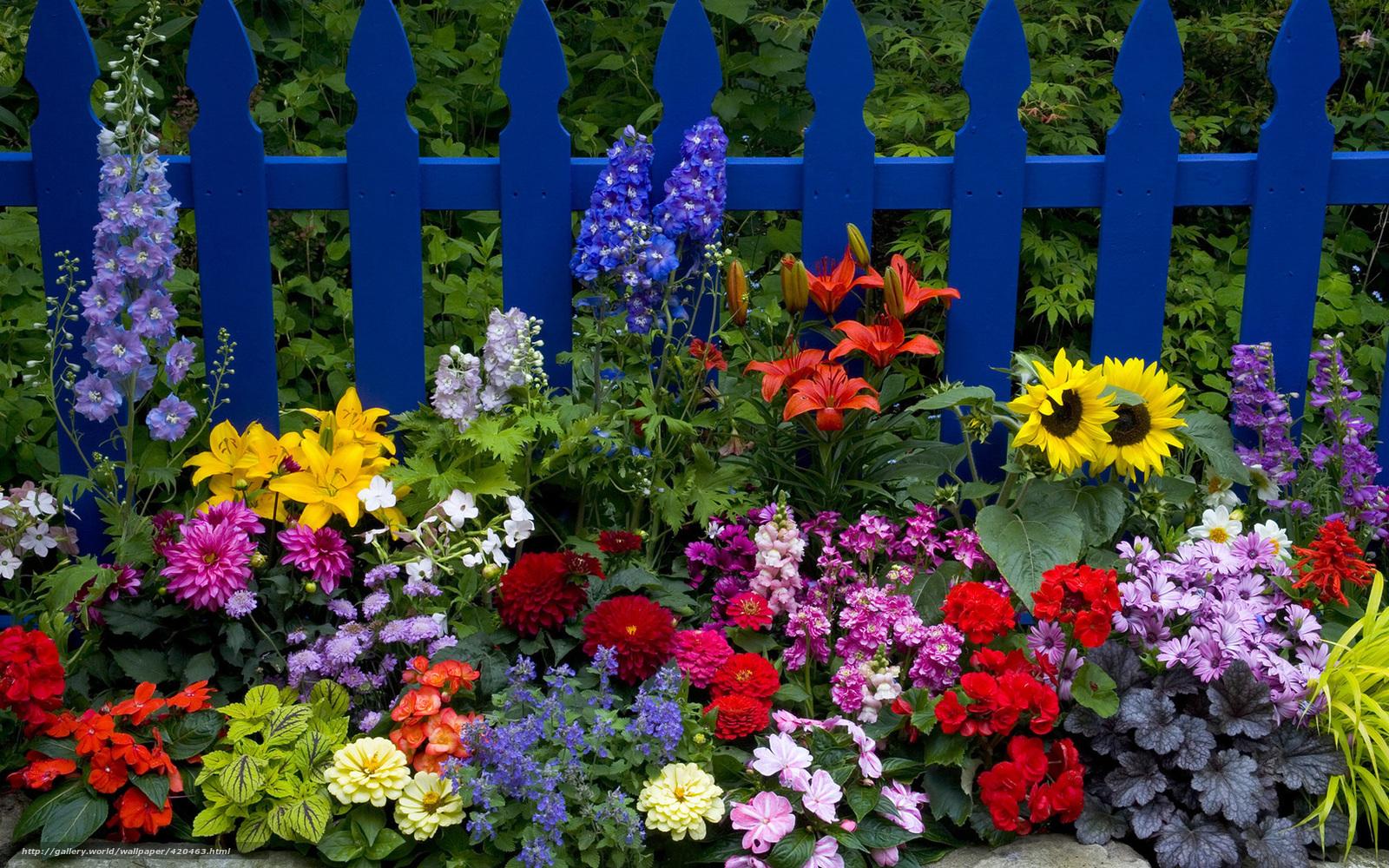 Разные многолетние цветы