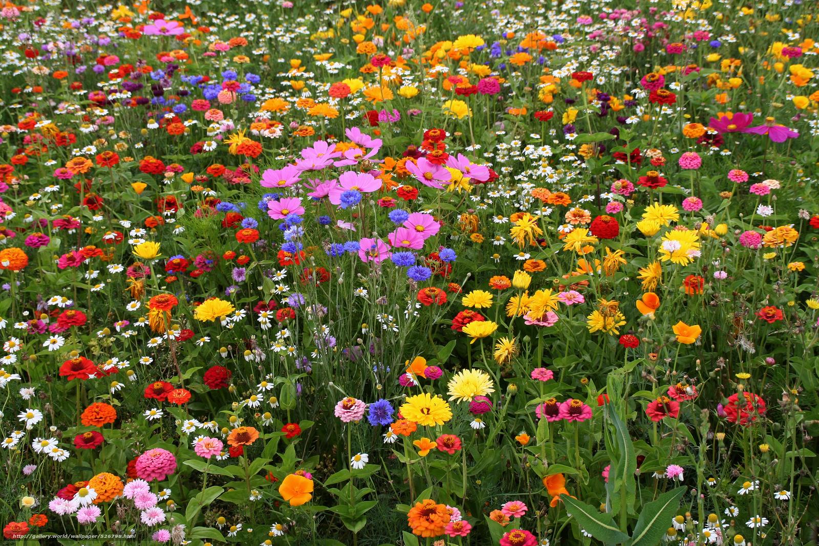 Картинки поле цветов