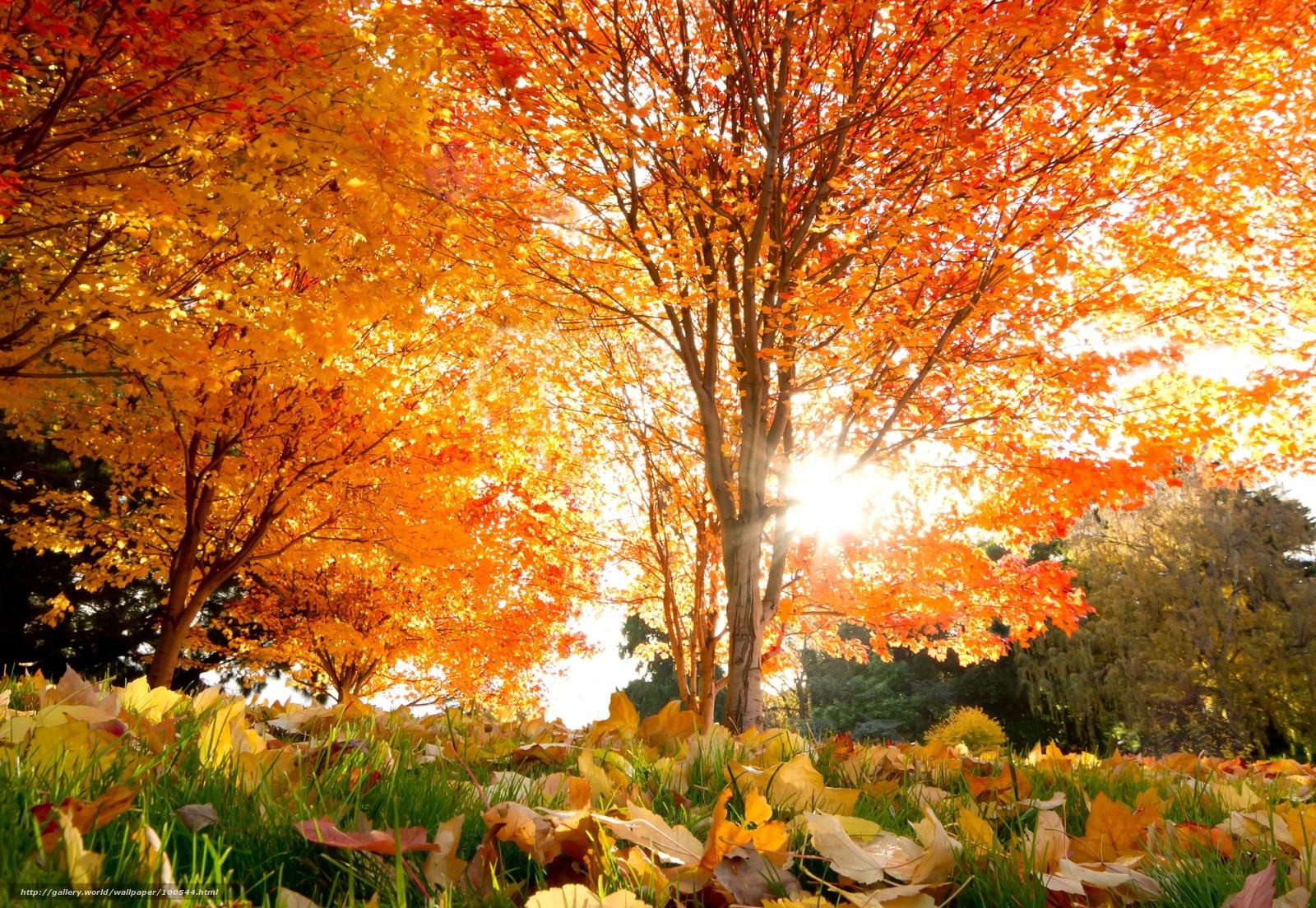 Скачать обои осень, красивые,...