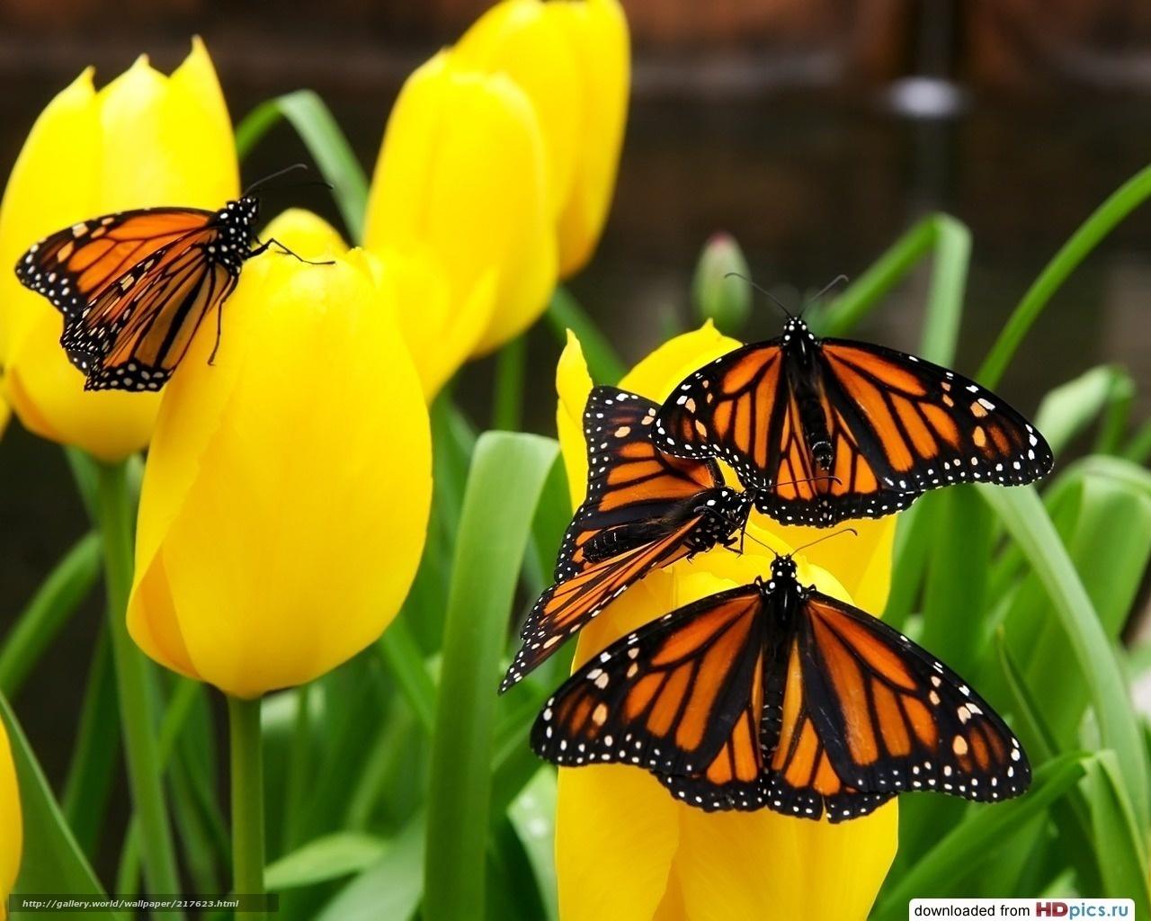 Желтые тюльпаны цветы насекомые