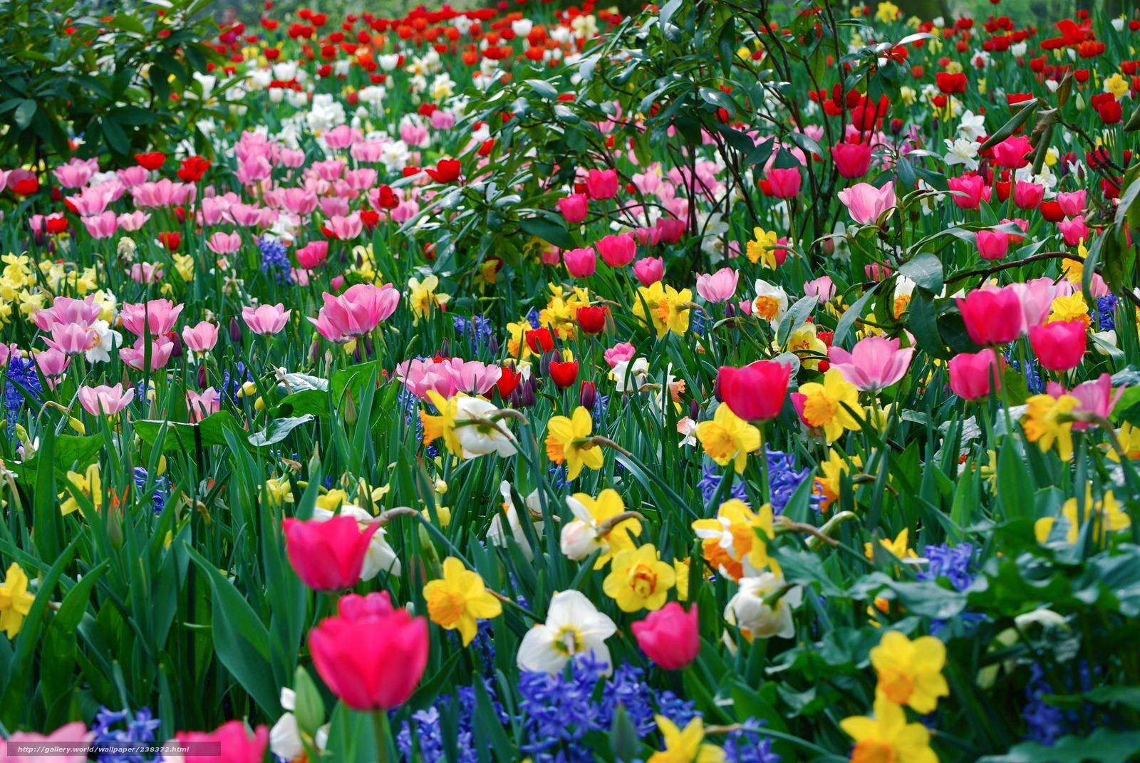 Tlcharger fond d'ecran fleurs, diffrent, beaucoup, printemps fonds d
