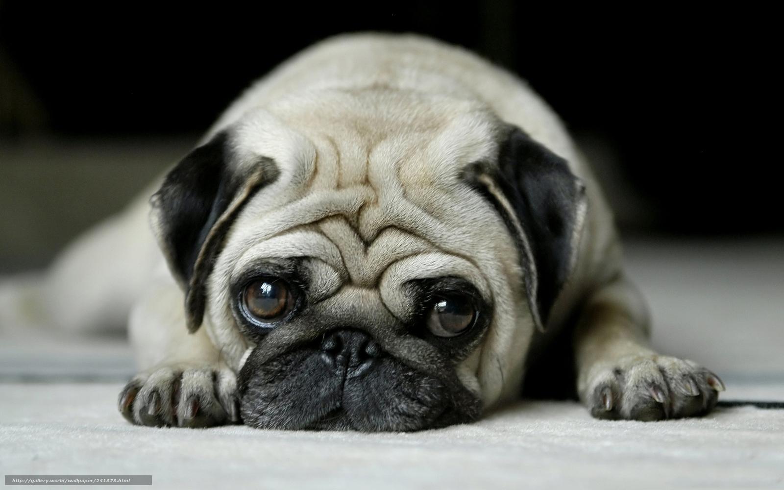 Cute Sad Puppy Dog Eyes