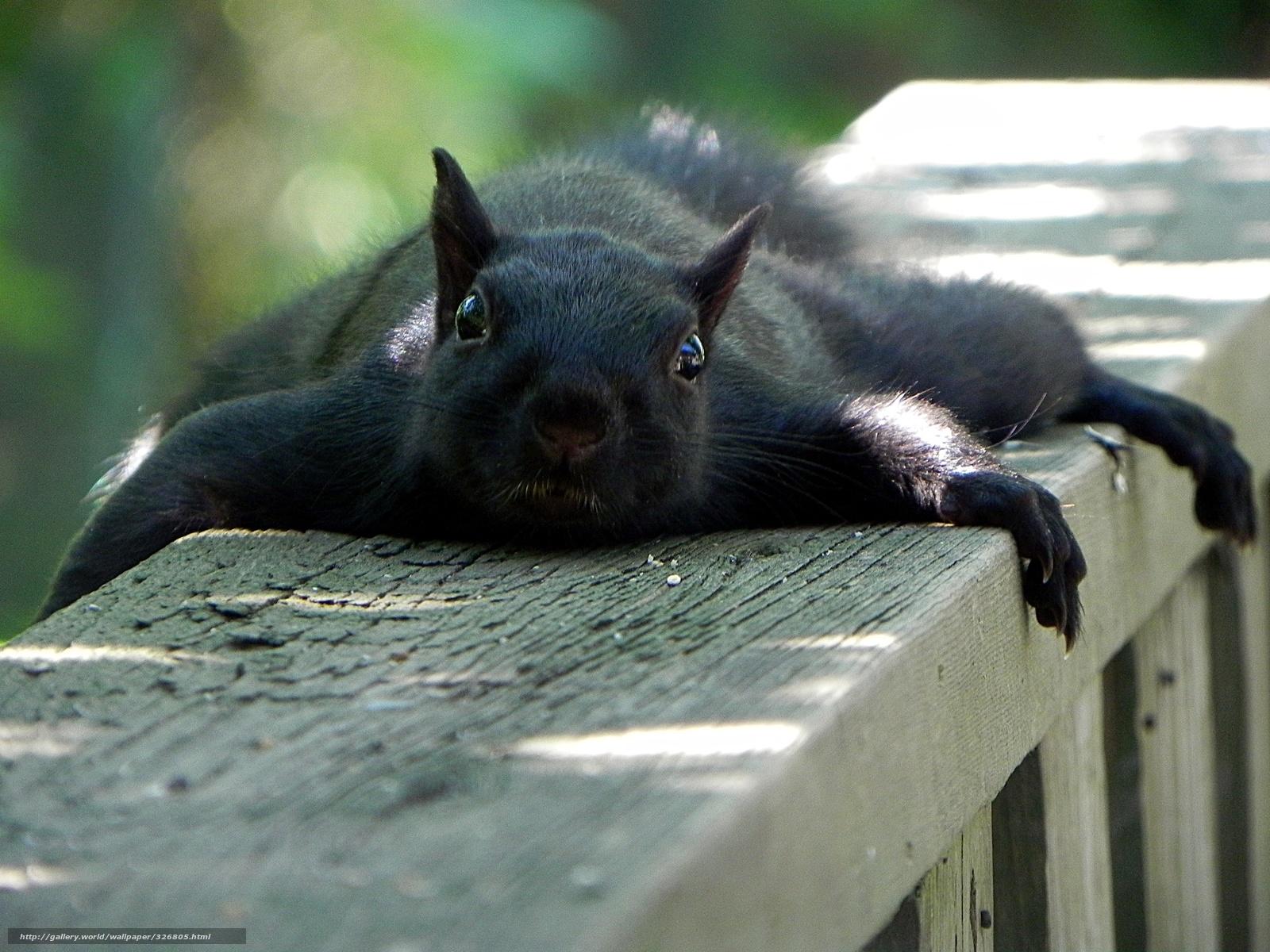 Photo #32 By Gdefon. Precious Cute Squirrels