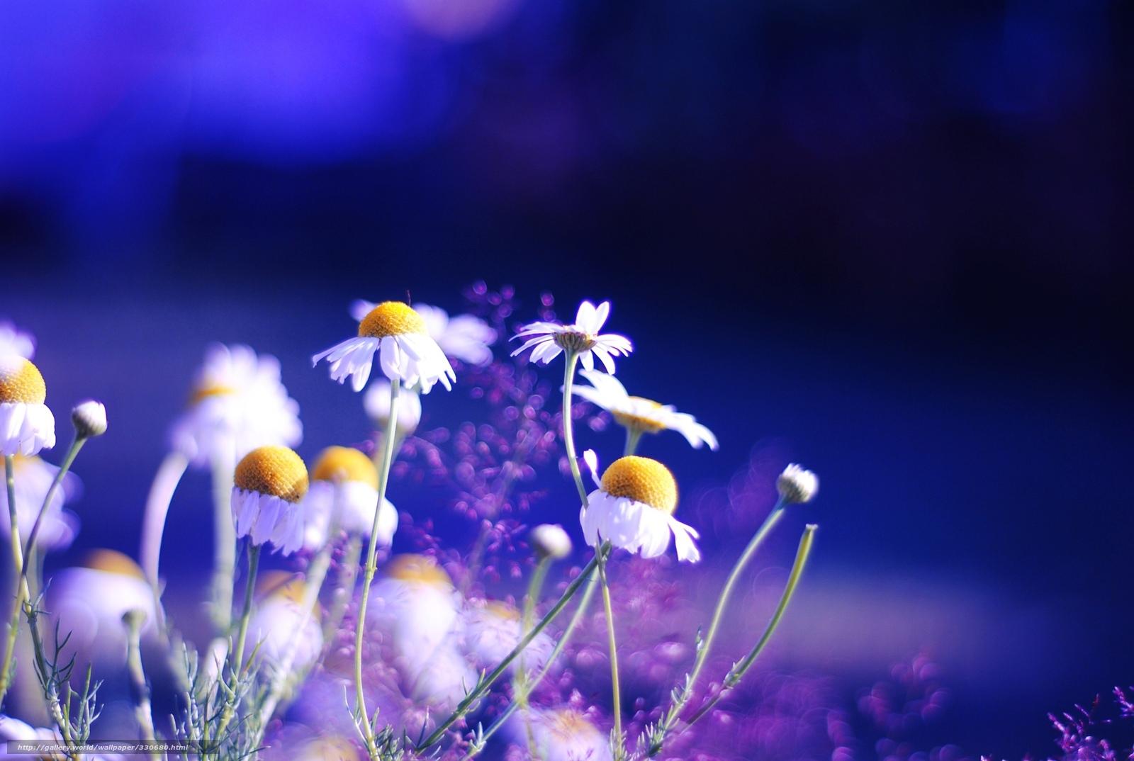 Яркие цвета растения фон обои