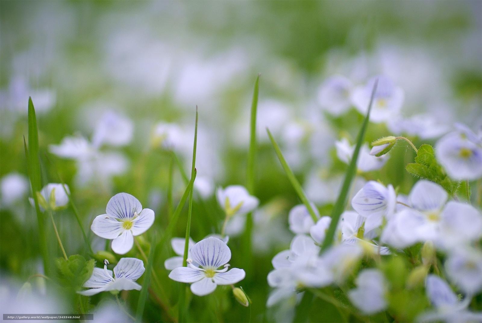 Wiosna, Przyroda, Natura, Kwiaty, Ogród - Tapety na Pulpit