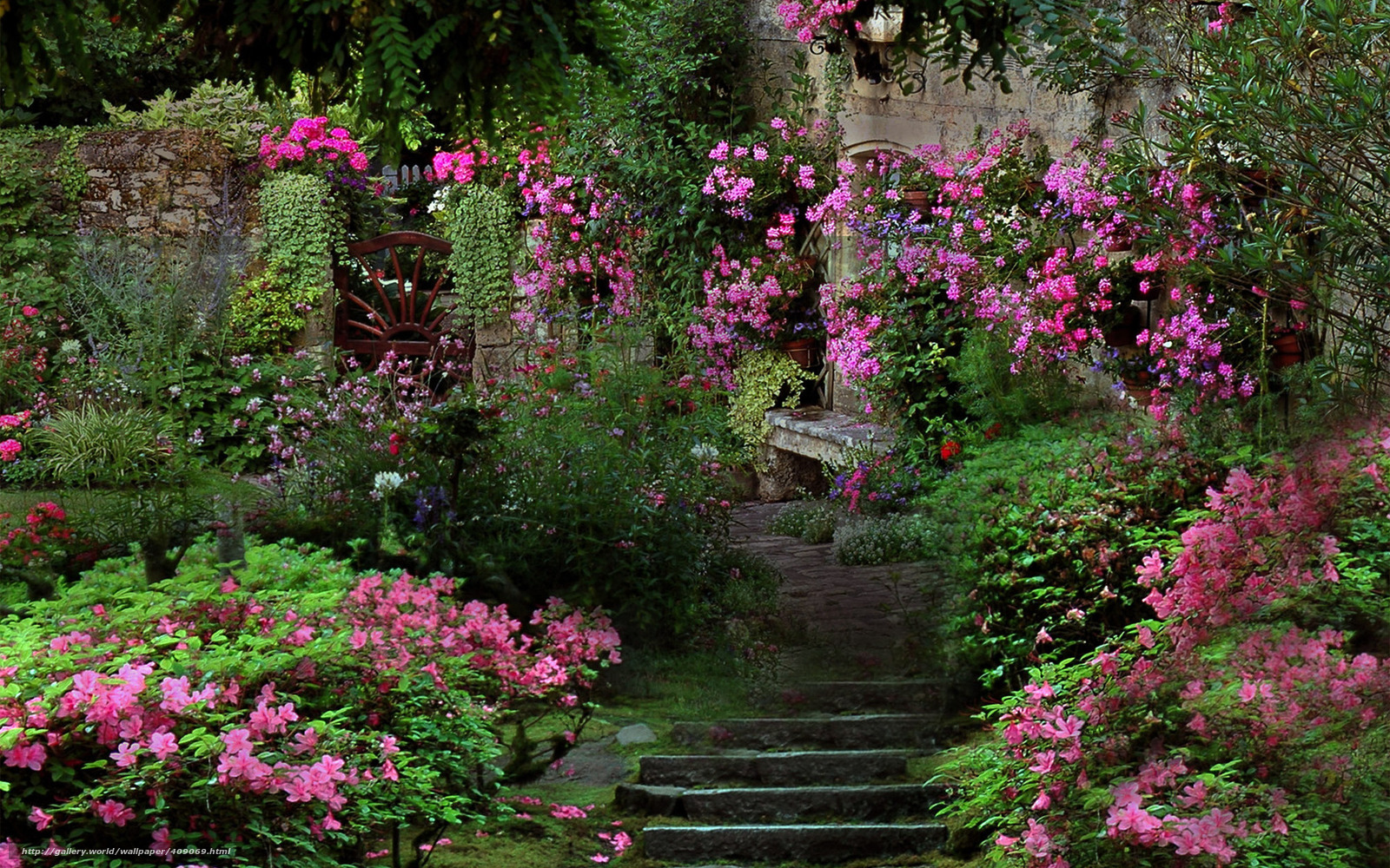 Jardin japonais for Parterre de roses photos