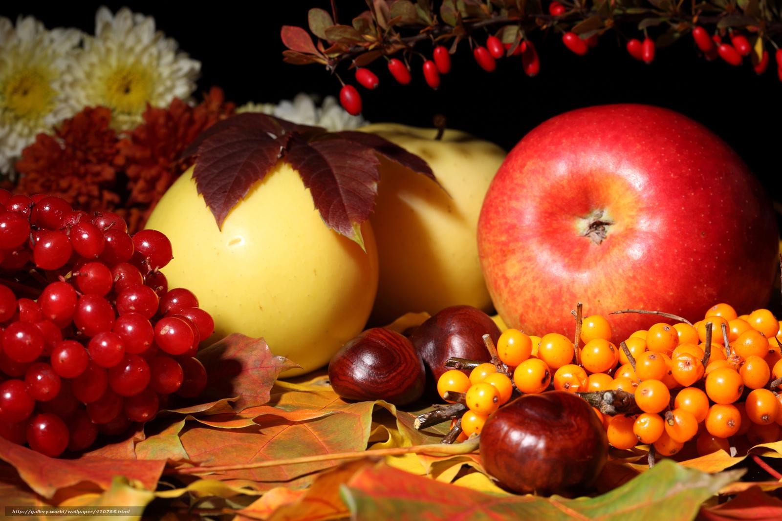 Tlcharger Fond d'ecran pommes,  Fleurs,  feuillage,  viorne Fonds d'ecran gratuits pour votre rsolution du bureau 4500x3000 — image №410785