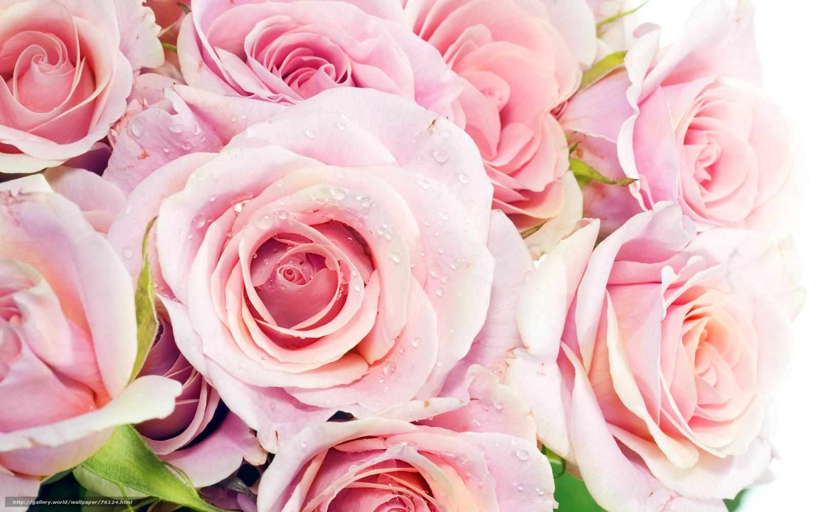 Скачать бесплатно заставки на рабочий стол розы