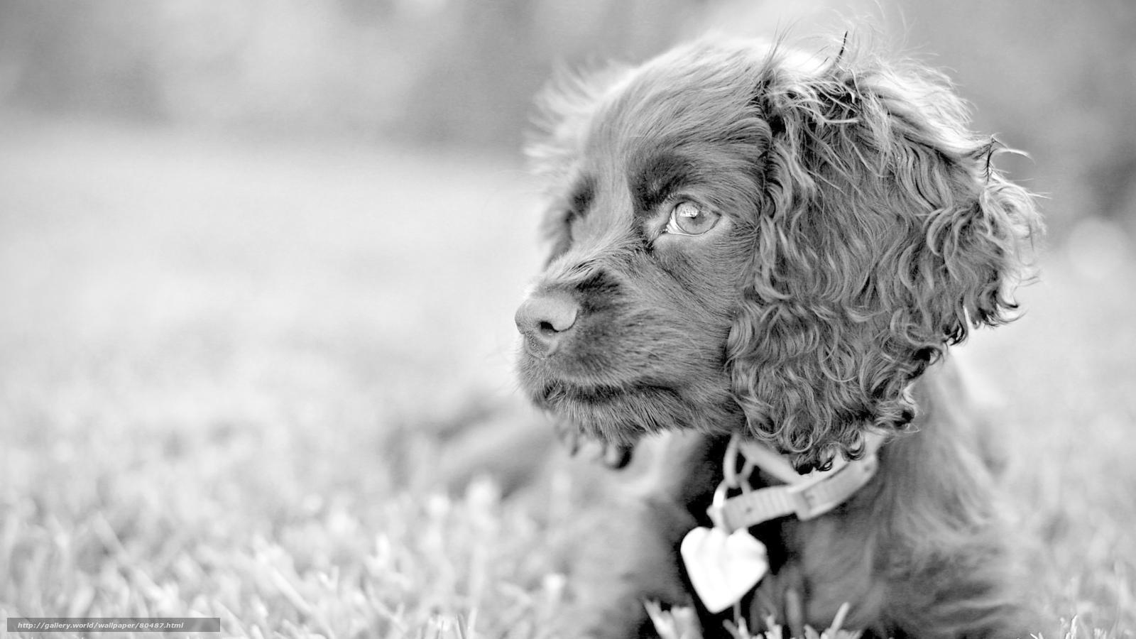 Find: dog, dog, грустные глаза...