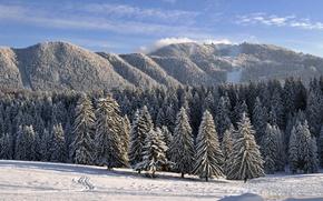 фотообои зима коллекция скачать