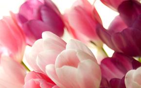 8 марта, поздравление, Беличанка