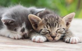 котята, парочка, отдых, сон, gdefon